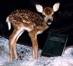 06_Feisty_Fawn