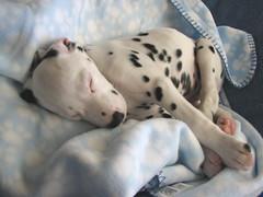 happy puppy photo by romeo'smom