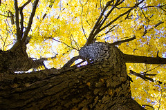 Yellow Canopy photo by PicturePeter