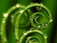 Spirals photo by jciv