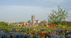 Worcester Cathedral from Fort Royal Park, Spring photo by flash of light
