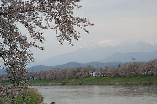 970420-白石川堤