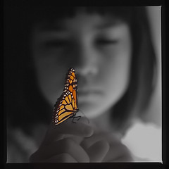 My butterfly photo by NaPix -- (Time out)