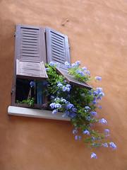 Finestra fiorita.  Ferrara 20 agosto 2007 photo by Zaffiro&Acciaio: Marco Ferrari