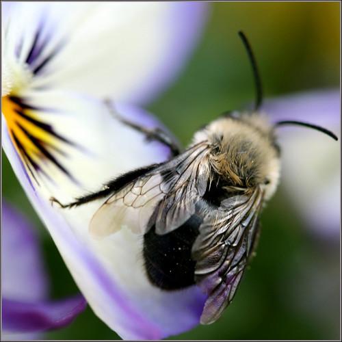 Beeautiful Pollinator
