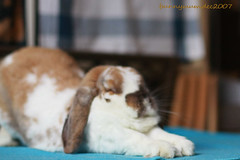 very lazy bun photo by jaimuima