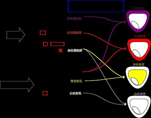 四種顏色種實.png