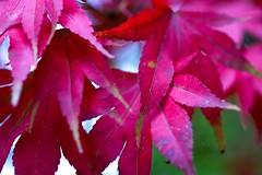 autumn 008