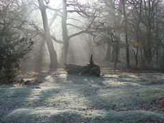 Misty Morning, New Forest, Hampshire, England photo by east med wanderer