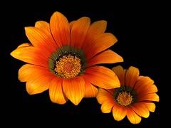 Flores amigas photo by hiskinho
