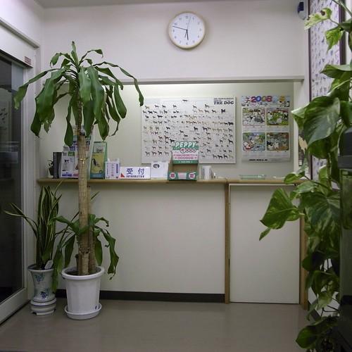うみの動物病院