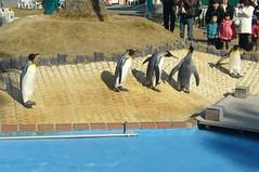 King Penguin(キングペンギン)