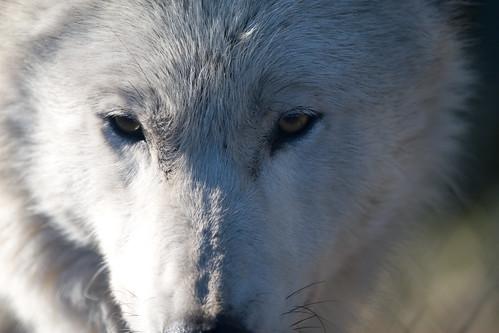 Wolf Haven-509.jpg
