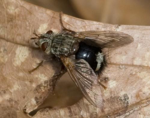 Fly #2