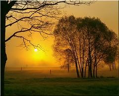 Hommik - Morning