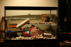 hamster home photo by captainmcdan