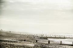 Beach Life - Beautiful Day x photo by brownkarena