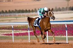 The Winning Horse photo by Waleed Alzuhair