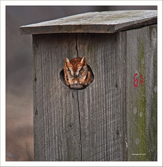 Shhhh Owl Sleeping photo by Kim Taylor Hull