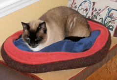 20080128 Cat Bed with Ruso