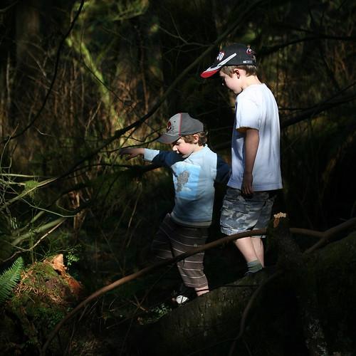dappled forest walk