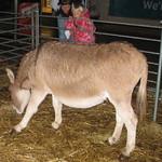 Little Donkey, Little Donkey<br/>21 Nov 2007