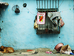 A Conference of Street Creatures - The Domestic Version photo by Tal Bright