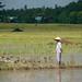 Vietnam-0904 © Bart Plessers