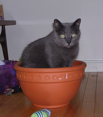 Potted Artemis