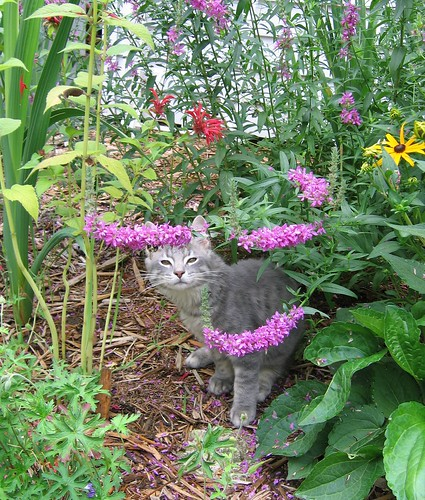 Cincinnati Cape Cod Cat Garden