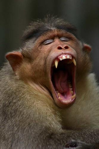 wild monkey ninja