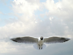 Seagull photo by digikuva