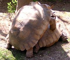 Turtle Love...