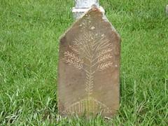 Tree Motif ... Black Oak Cemetery, Dekalb County AL