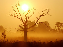 African sunrise photo by Kevin Day