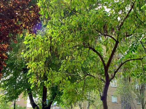 Tree 05 of 22