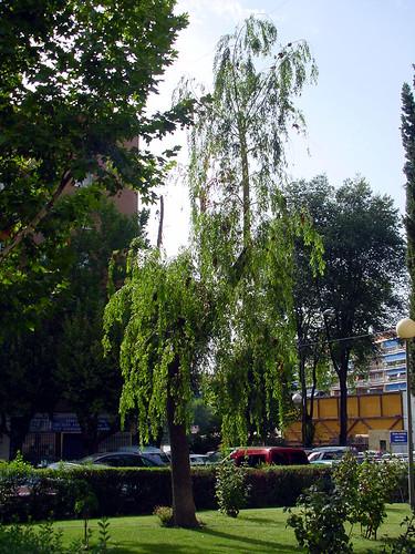 Tree 11 of 22