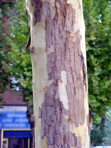 Tree 13 of 22