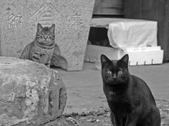 Cat 060119 #01