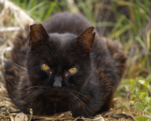 Huiskat is ruim 11 miljoen jaar oud