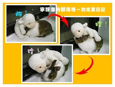 約克夏日記_20060115_柔道英兔