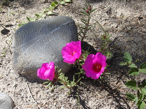 Flowers and a Rock