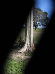 Tree Column