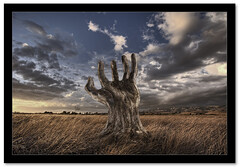 Hand Tree photo by Josh Sommers