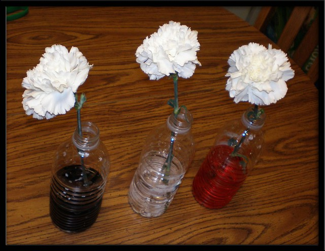 plant coloring pages science experiments - photo#30