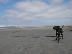 A seaweed huntin' dog photo by poindexterendurance