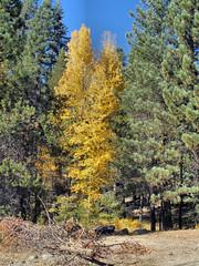 20071014 Aspen at Deer Creek