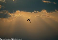بين أرضي والسما ظلي .. مثل طير(ن) في سماواته photo by ! نـجـم سـهـيـل