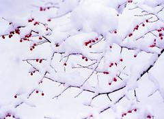 Winter Fruit:銀閣寺・早朝下雪了 photo by love_child_kyoto