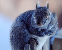 Gray Squirrel Winks photo by n8an